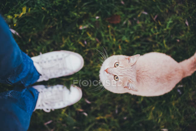 Red cat sitting at human legs — Stock Photo