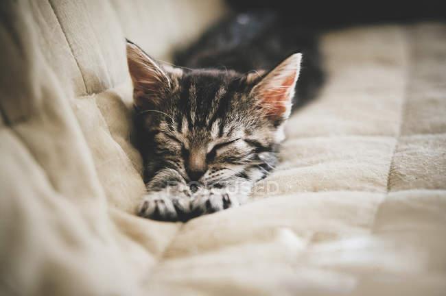 Gattino che dorme sul letto — Foto stock