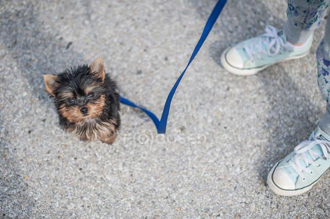 Девушка гуляет с собакой — стоковое фото