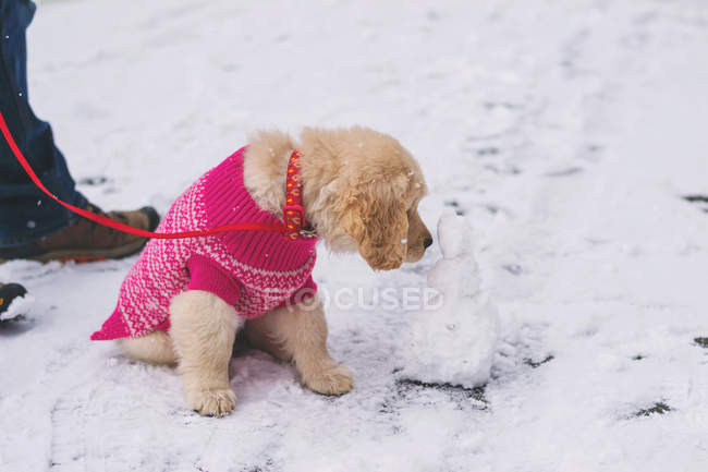 Puppy dog licking mini snowman — Stock Photo