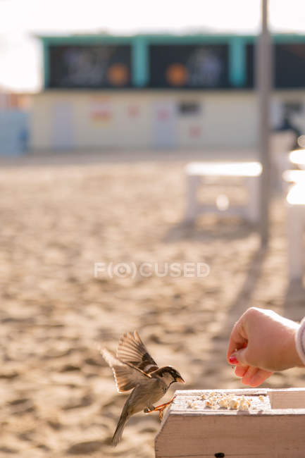 Woman feeding sparrow bird — Stock Photo