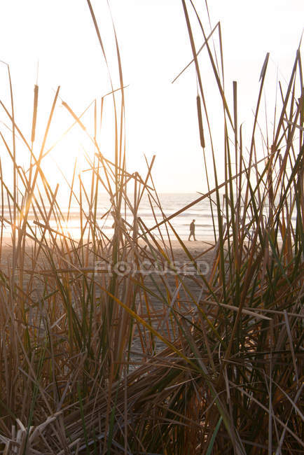 Man walks alone down the beach — Stock Photo