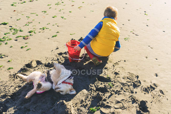 Boy digging on beach — Stock Photo
