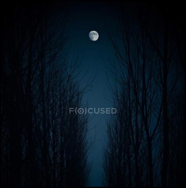 Moon over bare trees — Stock Photo