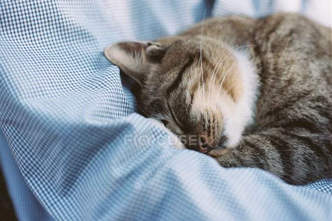 Cat sleeping on pillow — Stock Photo
