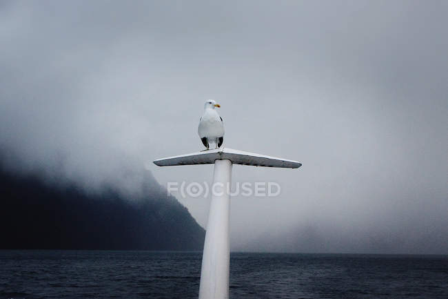 Pájaro posado en el extremo del barco - foto de stock