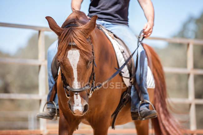 Man riding horse — Stock Photo