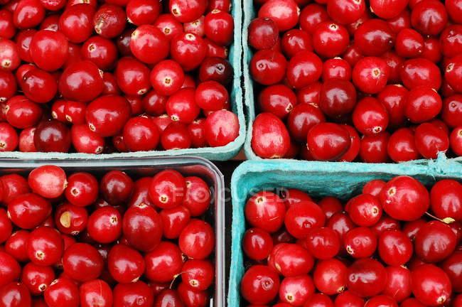 Rote Beeren in Körben — Stockfoto