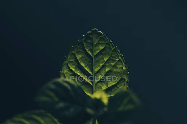 Vert détail naturel motif végétal — Photo de stock