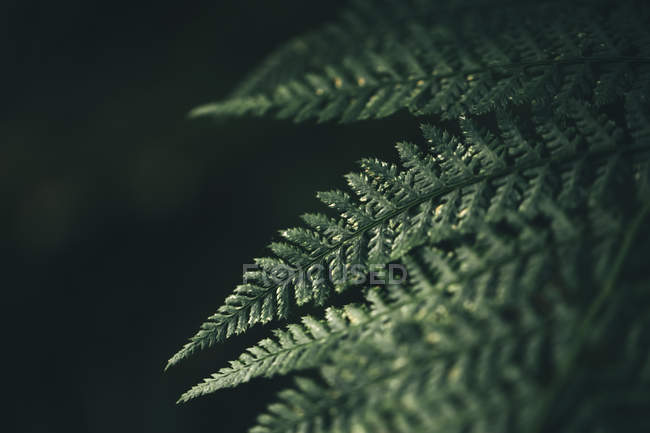 Green natural detail plant pattern — Stock Photo