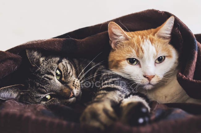 Tabby and red cats — Stock Photo