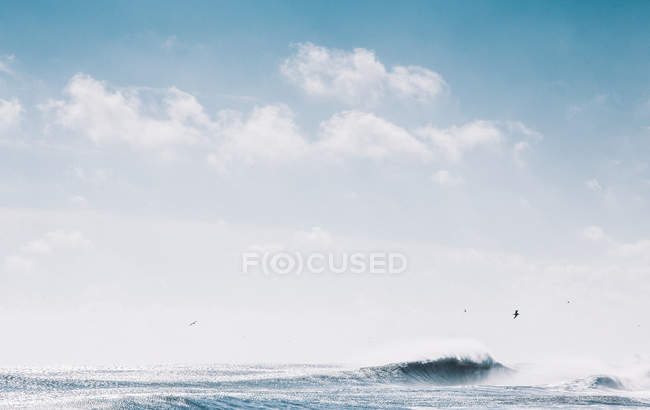 Seascape with seagulls and wave — Stock Photo