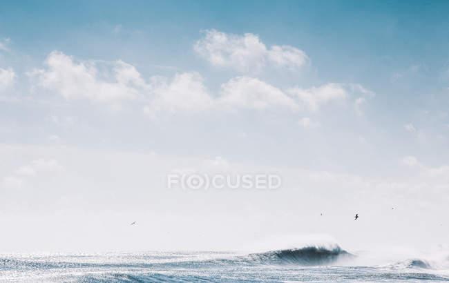 Seelandschaft mit Möwen und Welle — Stockfoto
