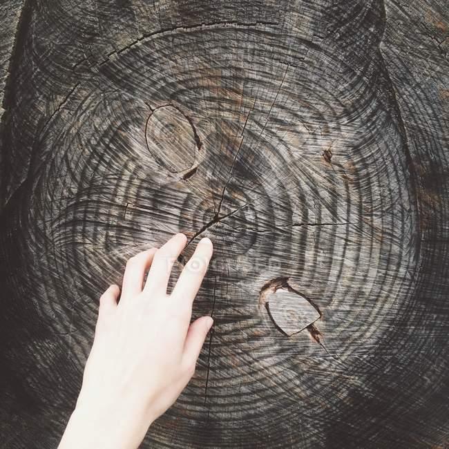 Hand und Baumstamm — Stockfoto