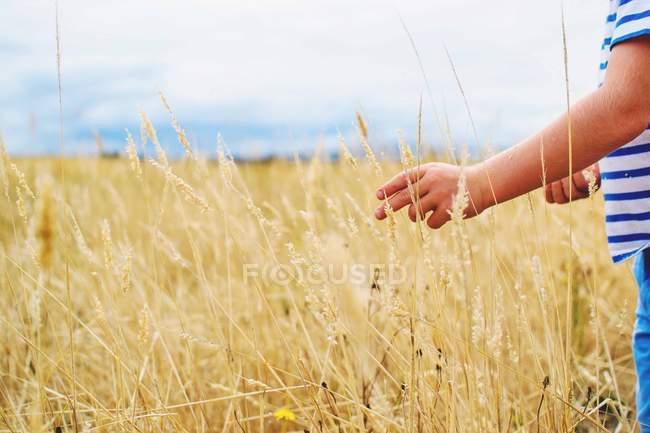 Kind pflückt Weizen — Stockfoto