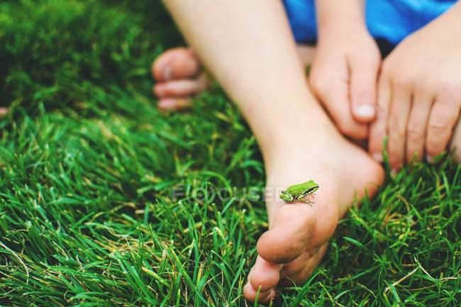 Маленькая лягушка на ноге ребенка — стоковое фото