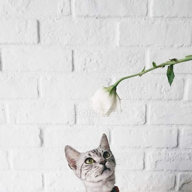 Gato olhando para flor — Fotografia de Stock