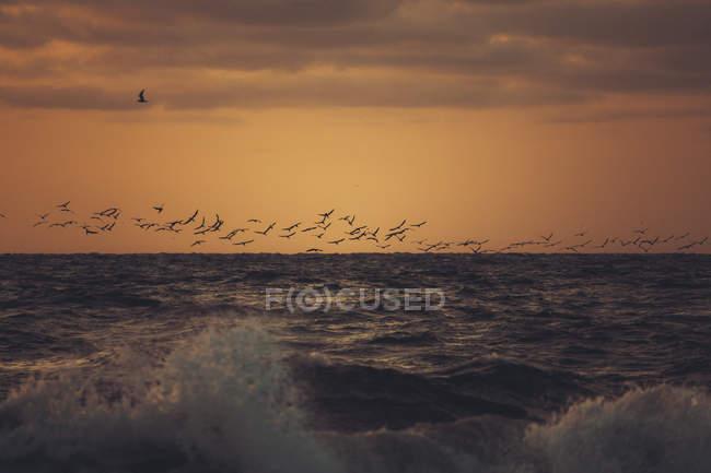 Flock of birds over the ocean — Stock Photo