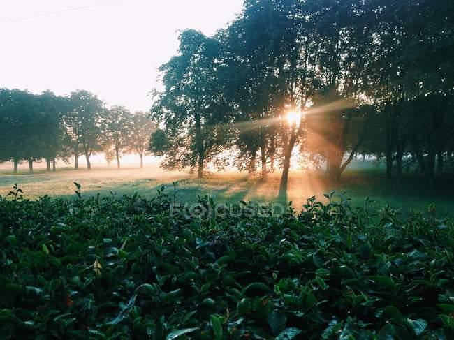 Luce del sole tra gli alberi — Foto stock