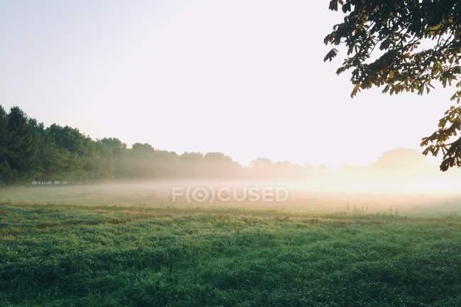 Nebbia su un campo vuoto — Foto stock