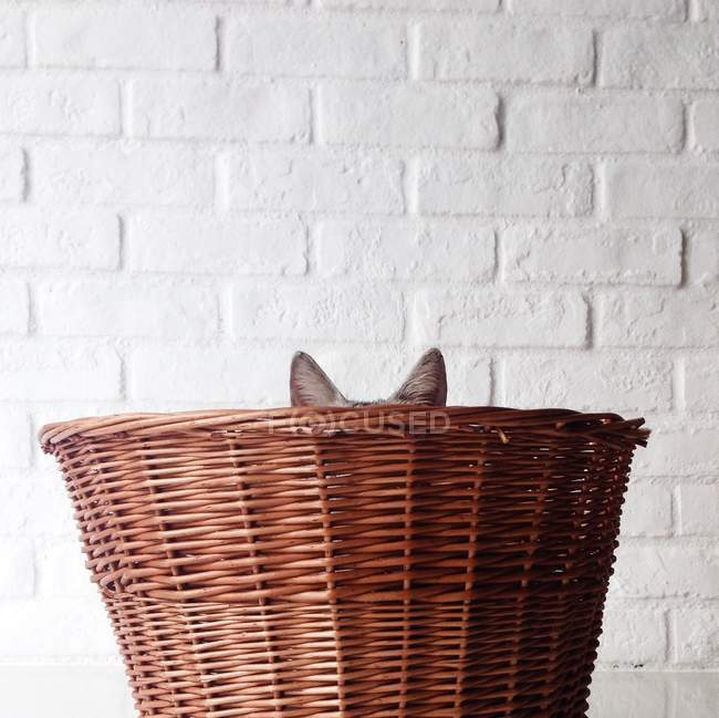 Cat hiding in Basket — Stock Photo