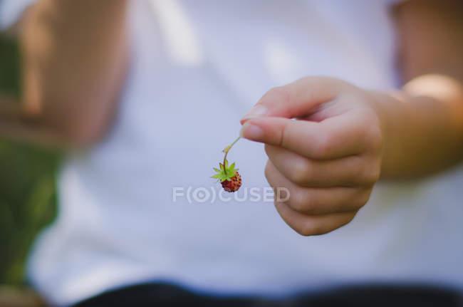 Мальчик с клубникой в руках — стоковое фото