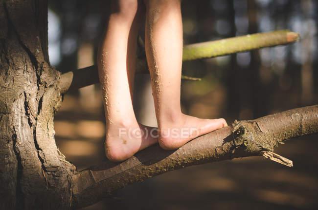 Дитина ноги на дереві — стокове фото