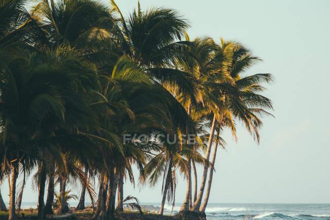 Praia tropical com palmeiras — Fotografia de Stock