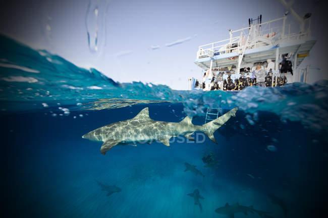 Barco y tiburón limón nadando bajo el agua - foto de stock