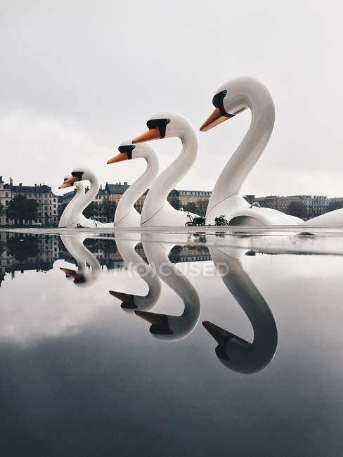 Barcos de cisne refletindo na água — Fotografia de Stock
