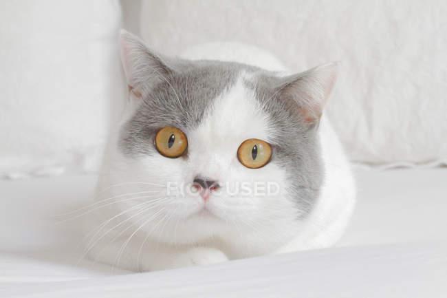 Porträt von Katze auf Bett — Stockfoto