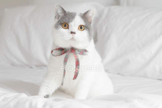 Gato sentado na cama — Fotografia de Stock