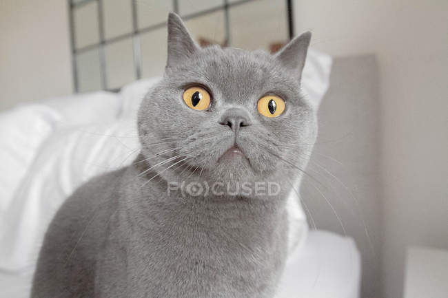 Cat looking at something — Stock Photo
