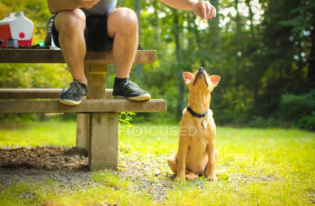 Человек кормит свою собаку — стоковое фото