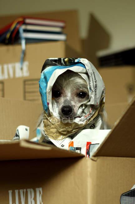 Портрет собаки, завернутый в газеты — стоковое фото