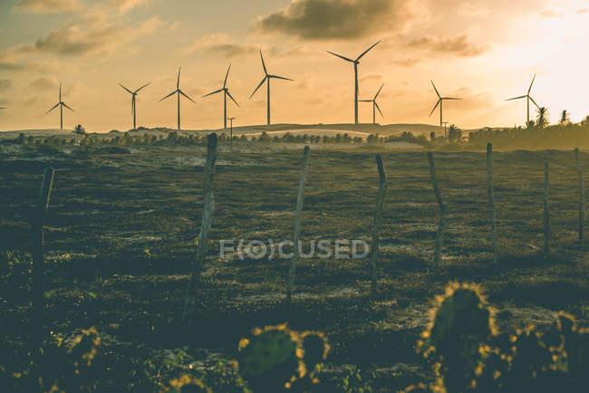 Cactus et éoliennes — Photo de stock