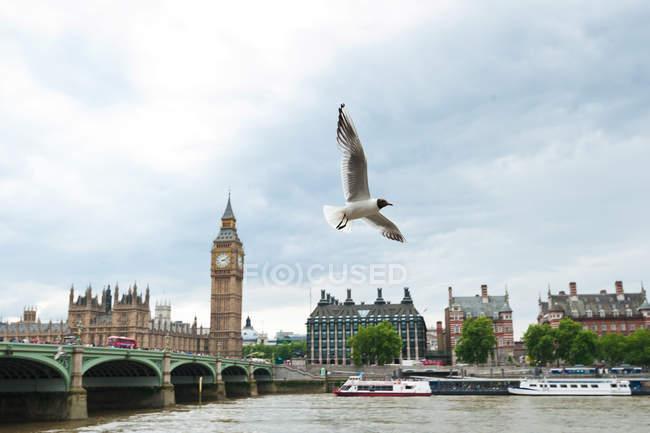 Gull near Big Ben — Stock Photo
