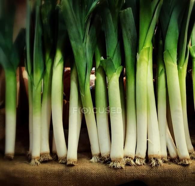 Fila de puerro verde orgánico fresco - foto de stock