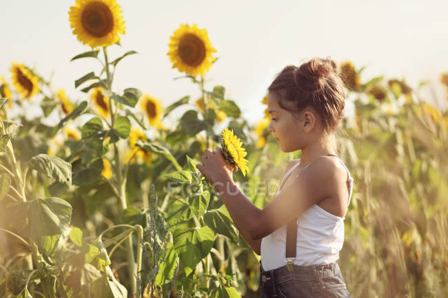 Girl in a field of sunflowers — Stock Photo