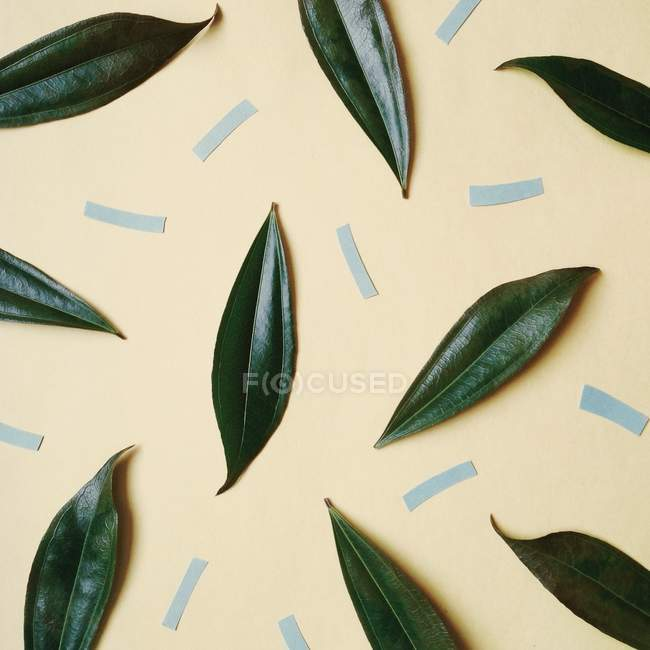 Paper and leaves pattern — Stock Photo