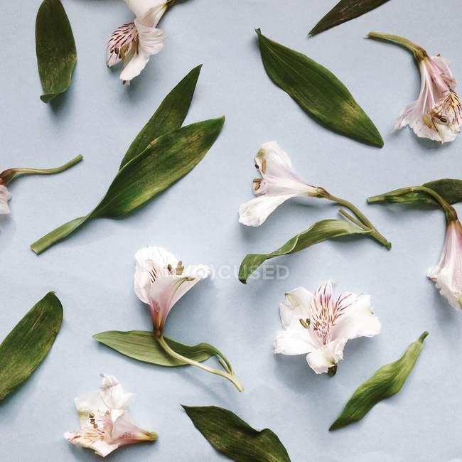 Padrão de flores e folhas — Fotografia de Stock