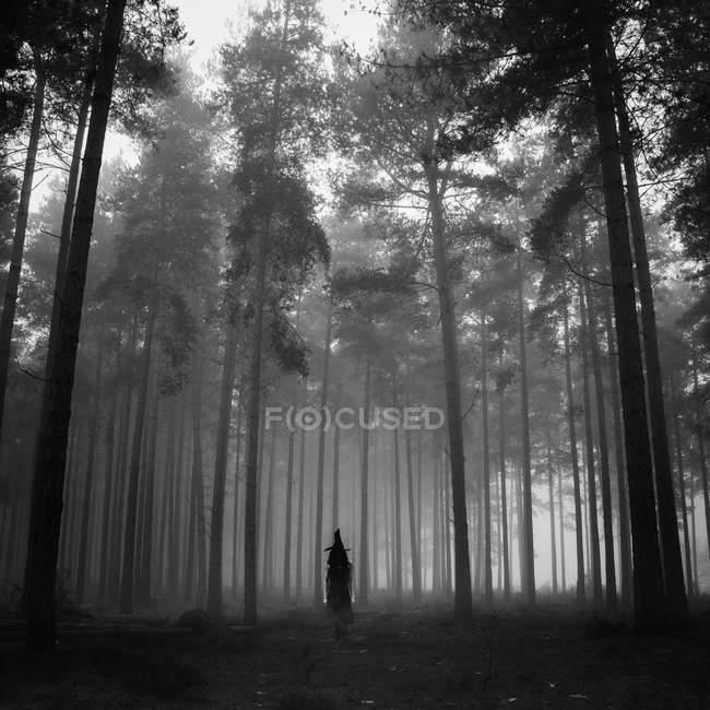Hexe im Wald — Stockfoto