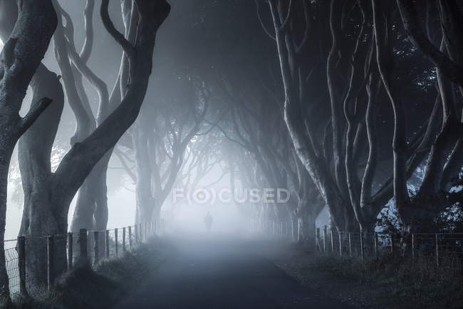 View along foggy walkway — Stock Photo