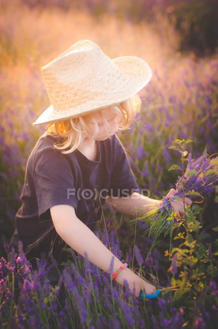 Kleiner Junge pflückt Lavendel — Stockfoto