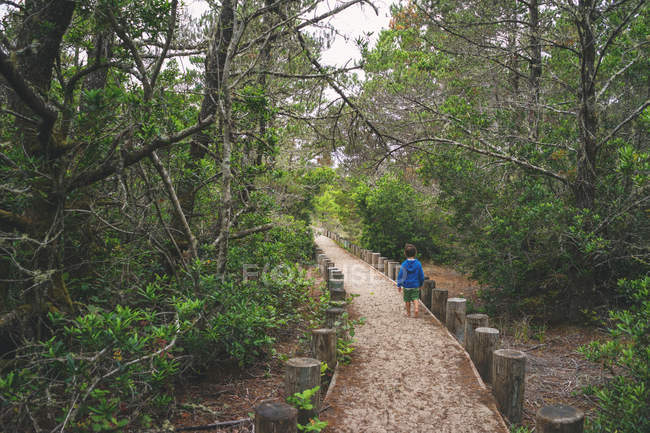 Boy walking through trail in the woods — Stock Photo