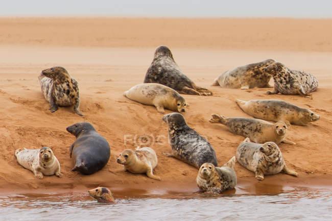 Горшок с печатями, лежащий на песчаном берегу — стоковое фото