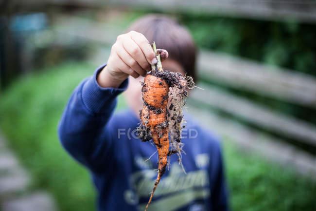 Zanahoria de explotación elegido chico - foto de stock