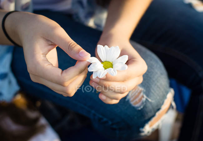 Hands holding beautiful white daisy — Photo de stock