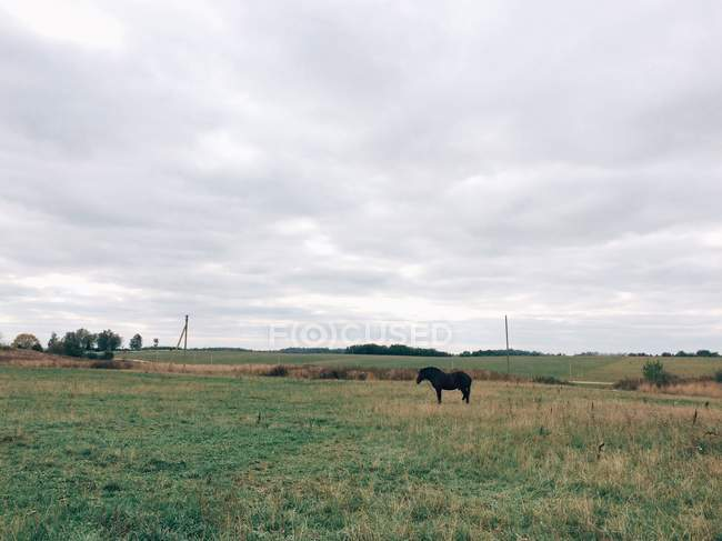 Horse standing in meadow — Stock Photo