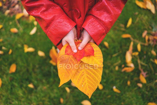 Chica sosteniendo hojas de otoño - foto de stock